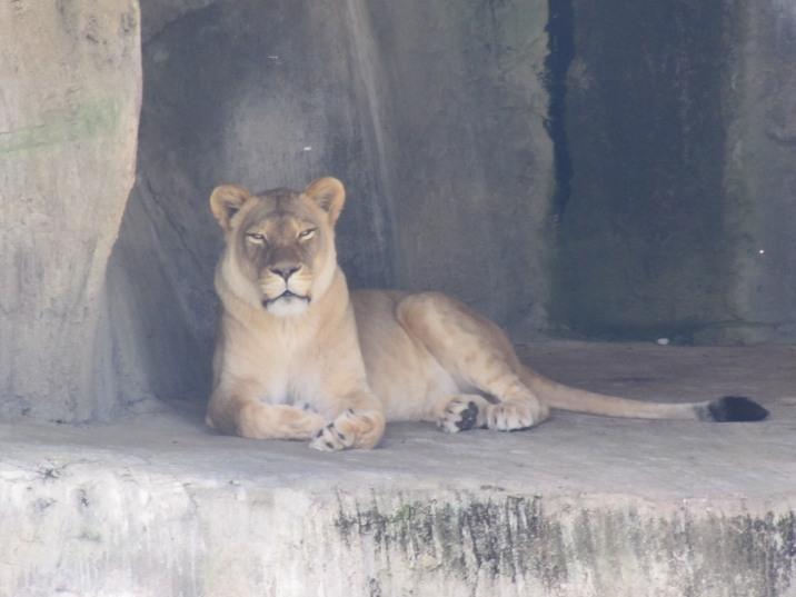 san-francisco-zoo-danies-bday-070